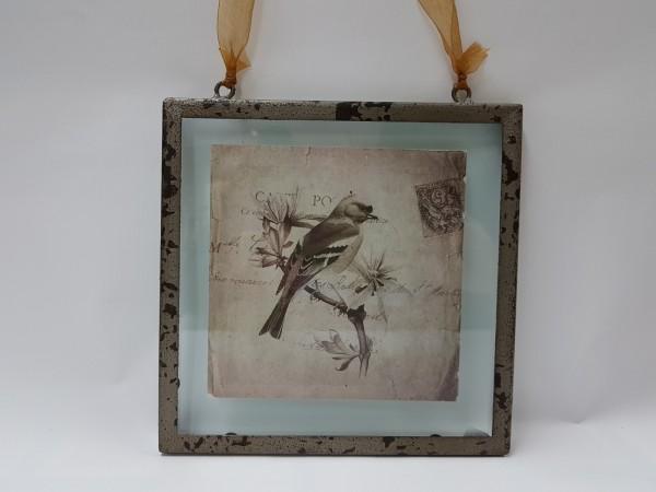 Bild Vogelpostkarte hinter Glas