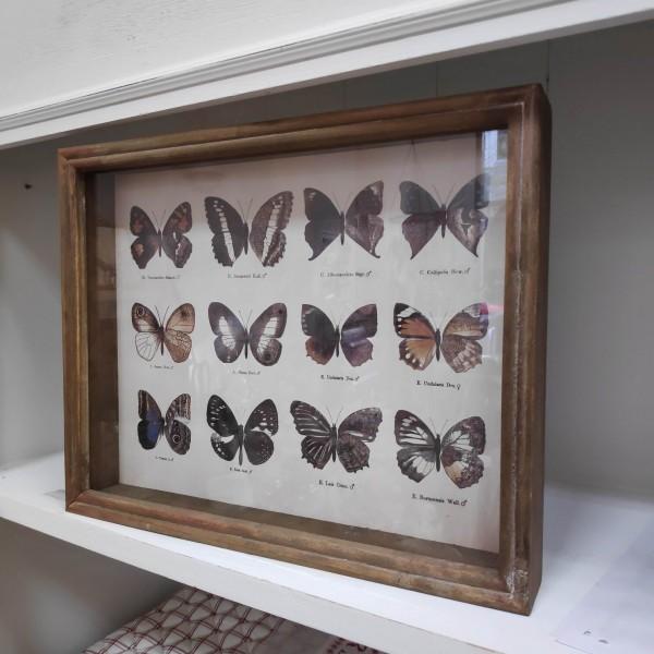 Bild Schmetterline