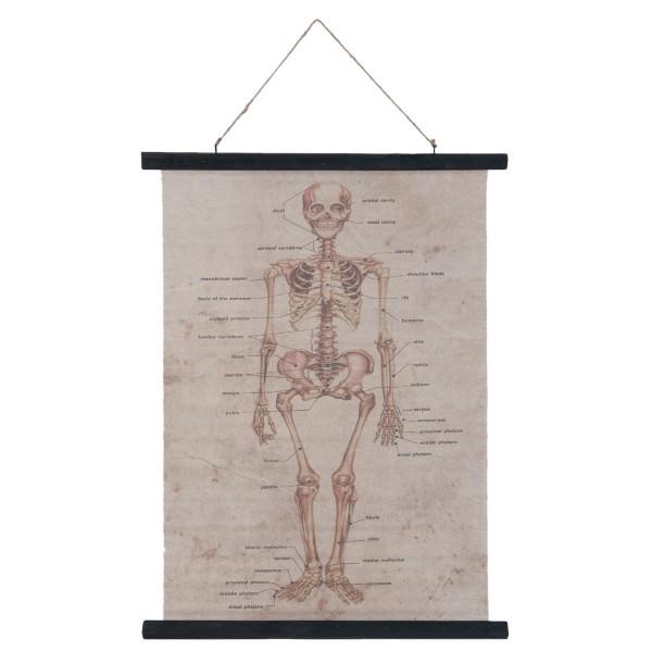 Wandkarte Skelett
